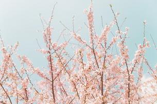 伸びゆく春の素材 [FYI00117568]