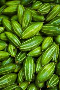 cute cucumbersの素材 [FYI00117578]