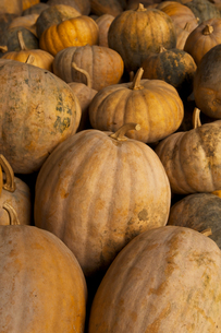 pumpkinsの素材 [FYI00117597]