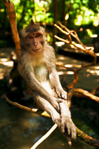 モンキーフォレストの猿の素材 [FYI00117628]