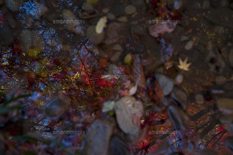 水面に映るモミジの素材 [FYI00117645]
