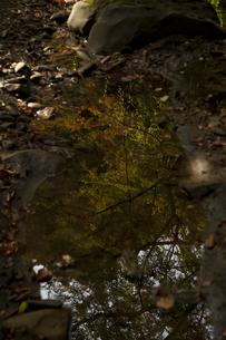 秋の山道の素材 [FYI00117647]