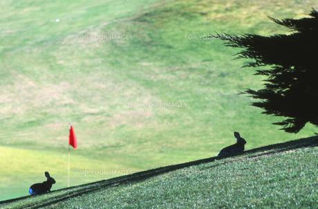 ゴルフ場の風景の写真素材 [FYI00117842]