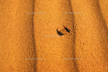 砂漠と生き物の素材 [FYI00117849]