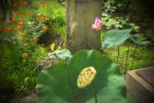 花の風景_バリの素材 [FYI00117951]