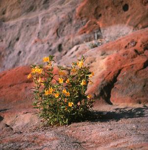 岩間の黄色の花の素材 [FYI00117959]