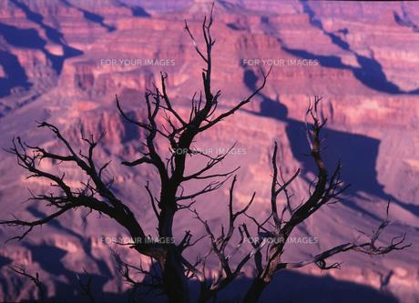 木と岩山の素材 [FYI00117996]