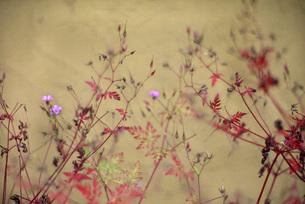 日本的な花の素材 [FYI00118000]