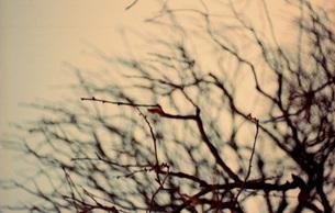 冬の木の素材 [FYI00118009]