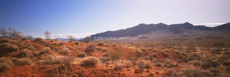 荒野_砂漠.jpgの素材 [FYI00118020]