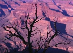 枯れ木と岩山の素材 [FYI00118058]