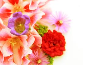 flowerの写真素材 [FYI00118111]