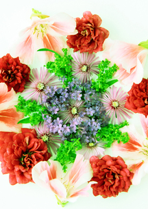 flowerの写真素材 [FYI00118115]