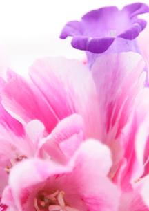 flowerの写真素材 [FYI00118116]