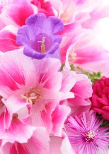 flowerの写真素材 [FYI00118123]