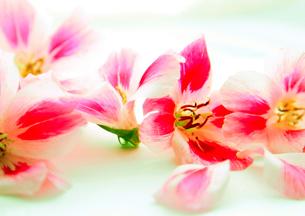 花の写真素材 [FYI00118126]
