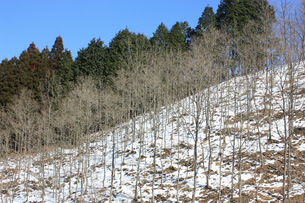 山間部の冬景色の素材 [FYI00119713]