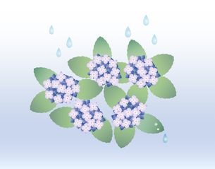 あじさい 雨の写真素材 [FYI00119791]