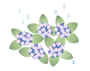 あじさい 雨の写真素材 [FYI00119801]