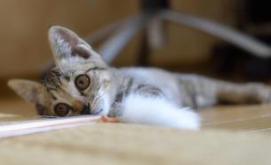 子猫の写真素材 [FYI00119826]