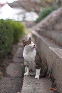 猫の写真素材 [FYI00119920]