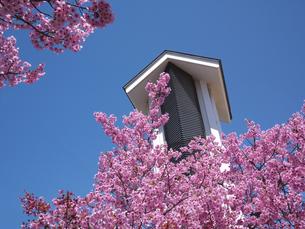 桜と和風建物の写真素材 [FYI00119943]