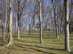 林の写真素材 [FYI00119955]