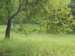 緑樹の写真素材 [FYI00119963]