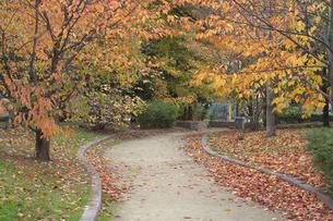 秋の小道の写真素材 [FYI00119964]