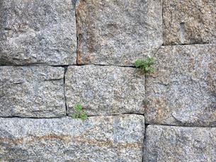 隙間に生える草の写真素材 [FYI00119993]