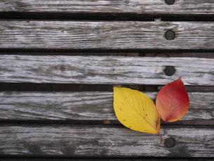 ベンチの上の二枚の落ち葉 の写真素材 [FYI00119998]