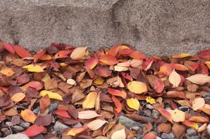 落ち葉の写真素材 [FYI00119999]