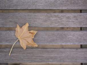 ベンチに散った枯れ葉の写真素材 [FYI00120003]