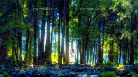 森の風の素材 [FYI00120436]