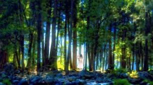 森の風の写真素材 [FYI00120436]