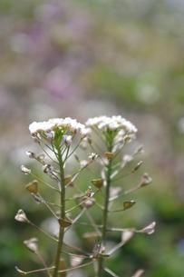 春の草花の写真素材 [FYI00120487]