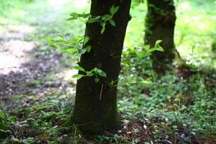 新緑の始まりの写真素材 [FYI00120498]