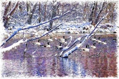 冬鳥の川の写真素材 [FYI00120505]