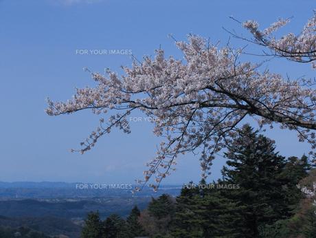 高尾の空と桜の写真素材 [FYI00120706]