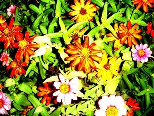 鮮やかな花の素材 [FYI00120707]