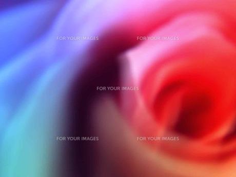 虹色の花弁の素材 [FYI00120708]