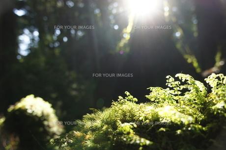光 の写真素材 [FYI00120809]