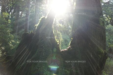 光の写真素材 [FYI00120830]