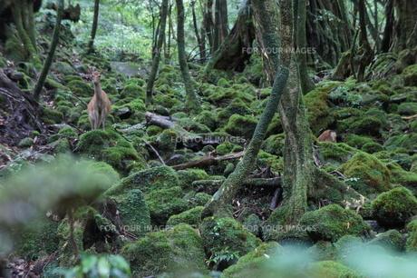 Yakushimaの写真素材 [FYI00120849]