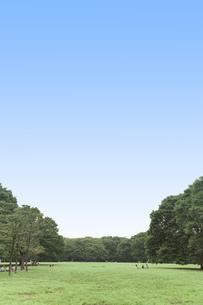 緑の上に広がる青空の写真素材 [FYI00120954]