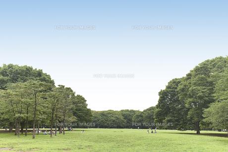 青空の広がる公園の写真素材 [FYI00120958]