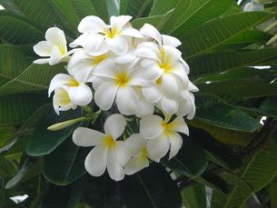 お花のブーケの写真素材 [FYI00121040]