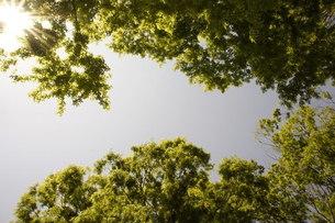 左から太陽の写真素材 [FYI00121113]