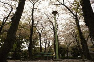 桜の中のベンチの写真素材 [FYI00121116]