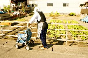 おばあちゃんが畑を見てるところの写真素材 [FYI00121130]
